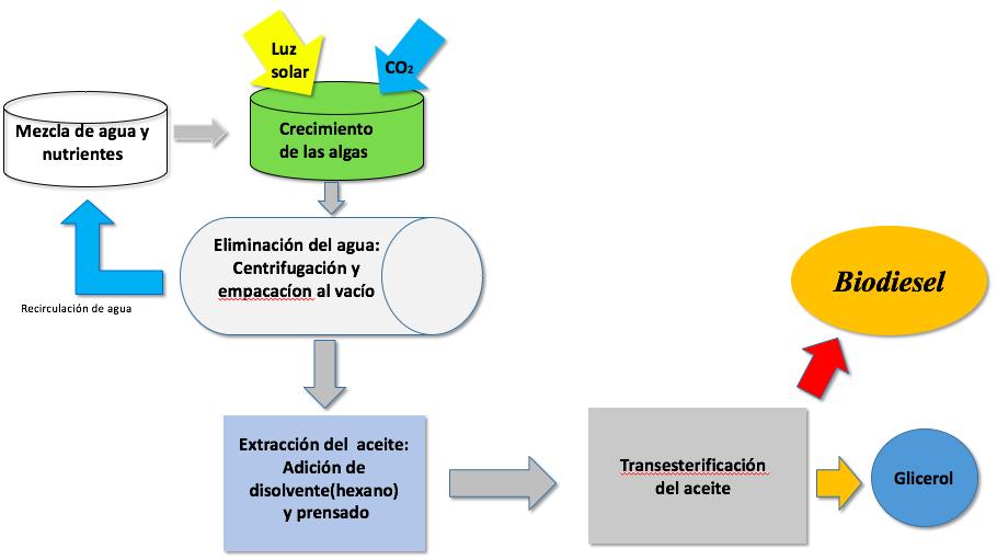 Planta de cultivo de algas para la produccin de biodiesel 44 diagrama de flujo captura de pantalla 2016 01 27 a las 174340 ccuart Images